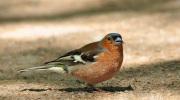 Ptaki małe